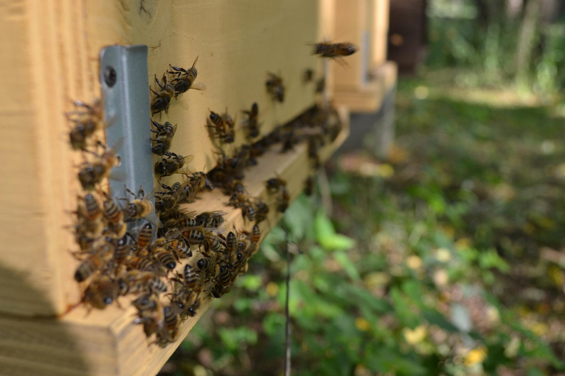gruppo-apicoltori-riuniti-api.jpg