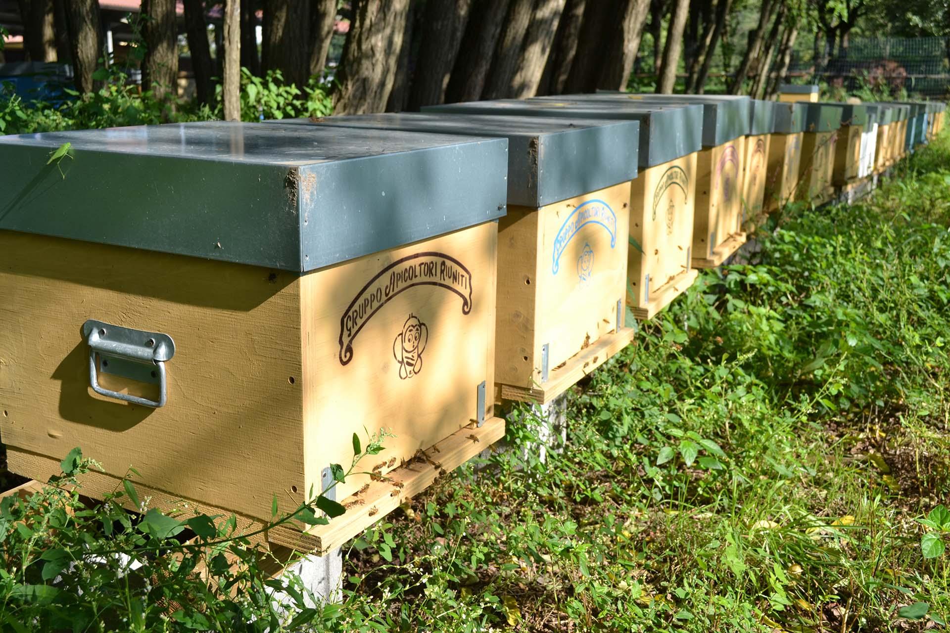 gruppo-apicoltori-riuniti-arnie.jpg